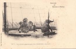 ZIRKUS BARNET & BAILEY, Elefantenshow, Les Artistes Gigantesques Chez,, Karte Um 1900 - Zirkus