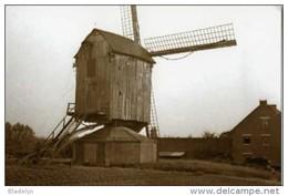 KORTENAKEN (Vlaams-Brabant) - Molen/moulin - Verdwenen Standaardmolen 'Moedermolen' In Zijn Nadagen - Kortenaken