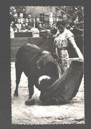 Corrida - Miguel Baez 'Litri' - Natural - Bull / Taureau / Stier - Corrida