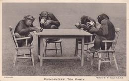 Postcard Chimpanzees Tea Party London Zoo [ Regents Park ] By Bond My Ref  B11773 - Monkeys