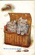 Cats -  We Have Just Arrived - All Well. - Gatos