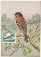 Hongrie Carte Maximum 1961 Yvert 1480 - Pinson  - Thème Animaux Oiseaux Illustration 2 - Maximumkarten (MC)