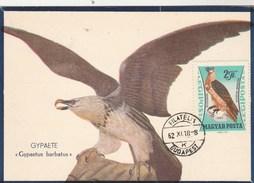 Hongrie Carte Maximum 1962 Yvert  PA 255 - Gypaète Barbu - Thème Animaux Oiseaux - Maximumkaarten