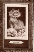 Cats -  My Sweetheart.       RPPC.   1909. - Katten