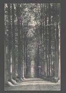 Tervuren - Parc De Tervueren - La Drêve Des Sept étoiles - 1911 - Tervuren