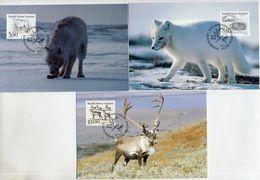 GREENLAND 1993 Native Mammals I On Maximum Cards.  Michel 239-41 - Maximum Cards