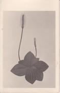 AK Zeichnung Einer Blume - Ca. 1950 (32398) - Blumen