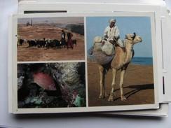 Egypte Egypt Fisherman On Camel Back - Andere