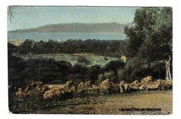 06 En 1907 Les Oliviers Du Cap D'Antibes N°2  Aqua Photo - Antibes