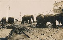 SINGAPOUR ?? - CARTE PHOTO - ELEPHANTS TRAVAILLANT SUR UN QUAI DE PORT - Singapore