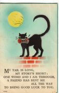 Cats - My Tail Is Long, My Story's Short...... - Chats