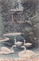 Baden - Pavillon U. Teich Im Kurgarten * 15. II. 1905 - AG Aargau