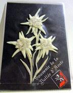 Lot De 3 Fleurs D' Eldelweiss Sêchés - B. Plantes Fleuries & Fleurs