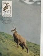 Tchécoslovaquie Carte Maximum 1963  Yvert 1306 - Chamois - Thème Animaux  - Illustration 2 - Czechoslovakia