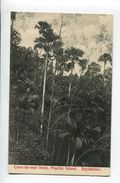 Coco De Mer Trees Praclin Island - Seychelles