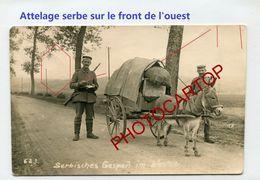Attelage Serbe-ANE-NON SITUEE-CARTE PHOTO Allemande-Guerre 14-18-1 WK-France-Militaria-Feldpost- - Oorlog 1914-18