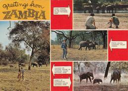 ZAMBIA - Greetings From Zambia - Luangwa National Park - Zambia