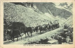 Cave Di Carrara - Transporto Blocchi Con Buoi - Carrara