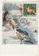 Pologne Carte Maximum 1965 Yvert 1485 - Renard - Thème Animaux - Illustration 2 - Cartes Maximum