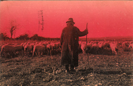 Thématiques Italie Italy Roma Campagna Romana Berger Et Son Troupeau De Moutons Cachet 1928 Timbre - Other