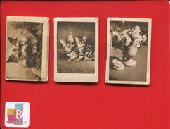BAGNEUX SEINE VOISIN 3 Calendriers De Poche Chat Chaton 1962 1963 En Bel état - Calendars