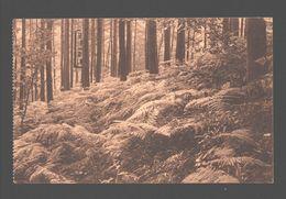 Groenendaal - Forêt De Soignes - Groenendael - Les Fougères Au Kerrenberg - Hoeilaart