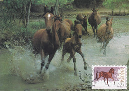 THE HORSE - Caballos