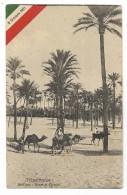 TRIPOLITANIA - NELL'OASI - BOSCO DI PALMIZI   FP - Libya