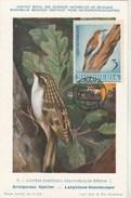 Albanie Carte Maximum 1964  Yvert  702 - Grimpereau Familier - Thème Animaux Oiseaux - Albanie
