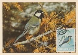 Albanie Carte Maximum 1964  Yvert  704 - Mésange Charbonnière - Thème Animaux Oiseaux - Albanie