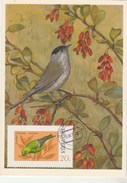 Albanie Carte Maximum 1975  Yvert  1524 - Verdier - Thème Animaux Oiseaux Chanteurs - Albania