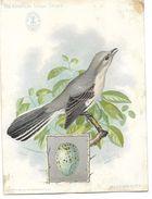 Publicité SINGER, CHROMO - Machine à Coudre En  ALGERIE -The American Singer Séries Oiseau Mocking Bird - Publicidad