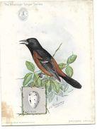 Publicité SINGER, CHROMO - Machine à Coudre En INDE, BOMBAY -The American Singer Séries Oiseau ORCHARD ORIOLE - Reclame