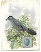 Publicité SINGER, CHROMO - Machine à Coudre En HOLLANDE Netherlands -The American Singer Séries Oiseau CAT BIRD - Publicidad