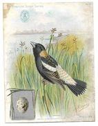 Publicité SINGER, CHROMO - Machine à Coudre En AUTRICHE TYROL -The American Singer Séries Oiseau BOBOLINK - Reclame