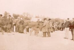France Angouleme Scene De Marché Boeufs Ancienne Photo Henri Billard 1893 - Oud (voor 1900)