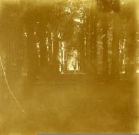 Belgique Brasschaet Drève Du Chateau Thys Ancienne Stereo Photo Amateur 1919 - Photographs