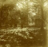 Belgique Brasschaet Polygone Château Du Mick ? Ancienne Photo Stereo Amateur 1919 - Photographs