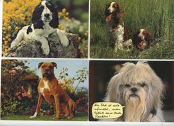Beau Lot De 60 Cartes Postales Semi Modernes Gr. Format   Mooi Lot Van 60 Postk. Fantasie Honden - Dogs - Chiens -Hunden - Chiens