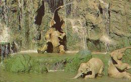 USA        177        Disneyland.Elephant Bathing Pool - Orlando