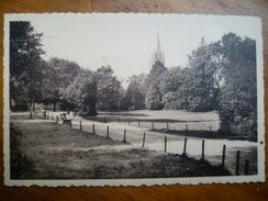 BOITSFORT Le Parc (195...) - Forêts, Parcs, Jardins