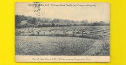 CROYDON Rare John Jackson Fields Showing Peppermint Crop () Surrey Angleterre UK - Surrey