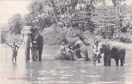 CEYLON CEYLAN Eléphants - Sri Lanka (Ceylon)