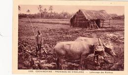 COCHINCHINE VIETNAM Province De Vinhlong Labourage Des Rizières Attelage Culture Agriculture - Vietnam