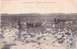 INDO-CHINE Tian-Bang Labourage Des Rizières Attelage Culture Agriculture - Postcards