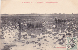 INDO-CHINE Tian-Bang Labourage Des Rizières Attelage Culture Agriculture - Cartes Postales