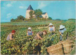 Marne : Champagne  Vendanges A  Situer - France
