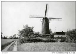 SNELLEGEM Bij Jabbeke (W.Vl.) - Molen/moulin - Historische Opname Van De Boerenmolen In 1973 Met Wieken. Momenteel Romp. - Jabbeke