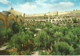 JERUSALEM, Jardin De Gethsemani.  (scan Verso - Jordanie