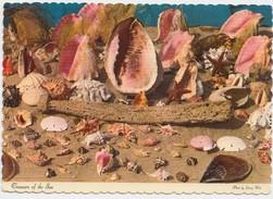 Treasure Of The Sea, Sea Shells, 1973 Used Postcard [20732] - Postcards